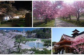 在函馆享受日本黄金周花季 —函馆市4大赏樱景点!