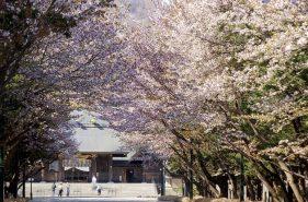 春天去札幌赏花!从经典到私藏——七大赏樱地点