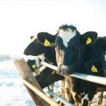 北海道根室与钏路地区牧场——6种美味牛奶大推荐