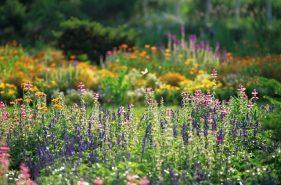 【春天的带广、十胜】——繁花盛开的十胜花园景点攻略