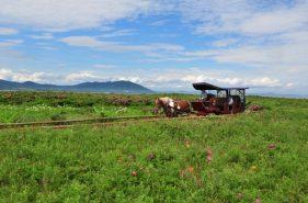 日本最大的海岸草原!道东的花之乐园—Wakka原生花园攻略