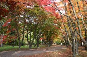 历史与美食的触碰之旅  秋天的函馆观光・景点・活动总结