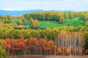 秋季来北海道旅行必看!推荐秋季景色超美的7处观光景点