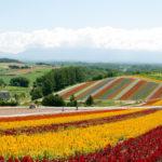 享受花和绝景的自行车之旅!富良野・美瑛骑行道的魅力