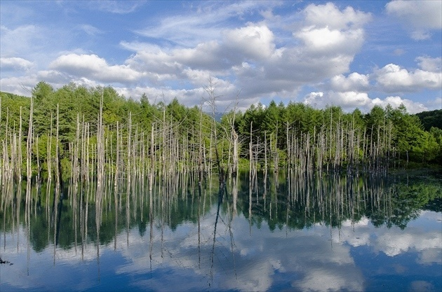 "The ""Blue Pond"" in Biei, its seasonal vistas, and how to get there"