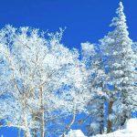 Enjoy the Kiroro Resort with Abundant Powder Snow!