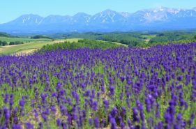 Hokkaido in July! All the unmissable sights, tastes and pleasures of the season