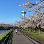 Hakodate in spring: the 4 best cherry blossom viewing spots in Hakodate!