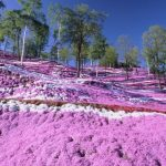 Springtime in Hokkaido! Here are some of our recommended tourist sites!