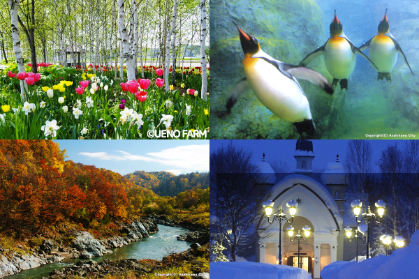 Asahiyama Zoo and Other Places of Note: Seven Must-See Sightseeing Spots in Asahikawa!