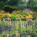 꽃내음 가득한 봄의 향연,  도카치의 가든!【봄의 오비히로(帯広)・도카치(十勝)】