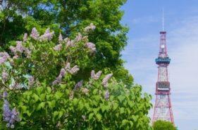홋카이도의 초여름을 물들이는「라일락」시즌 및 이벤트 소개