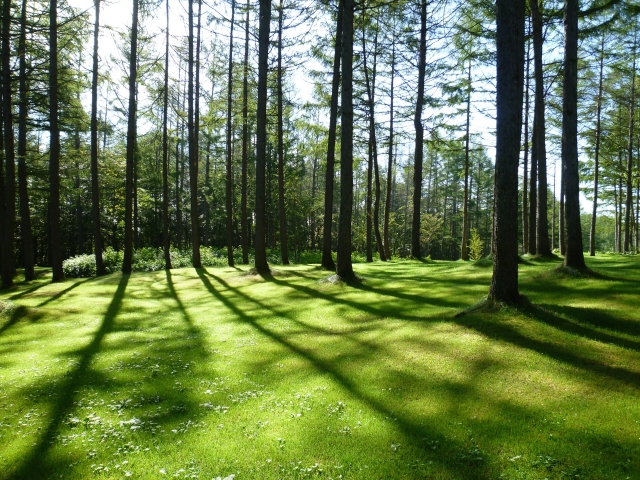 kazeno-garden