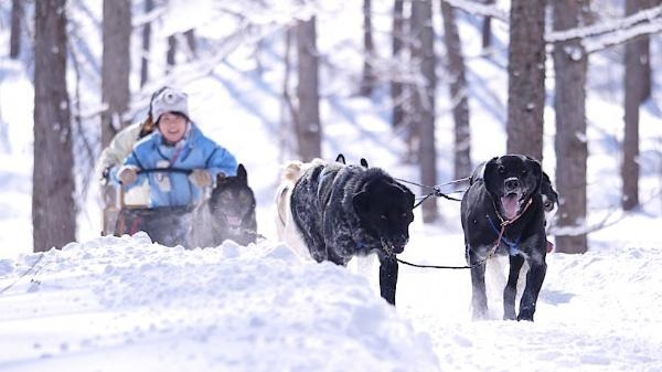 furano-winter-play-dog-sleighs-02_r