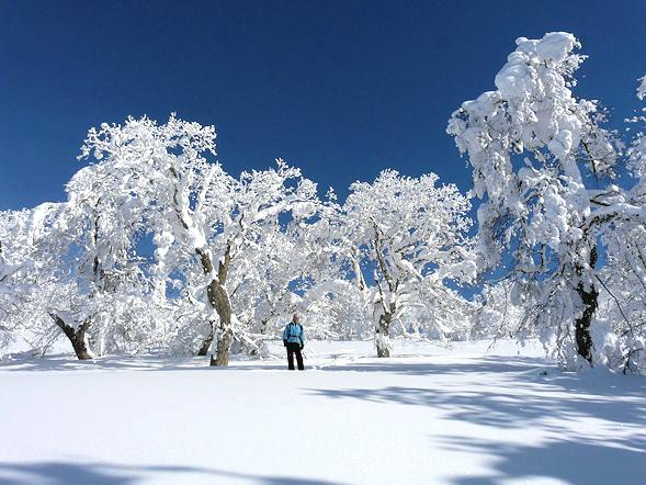 furano-winter-play-snow-picnic-22