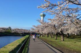 於函館享受日本黃金週花季 函館市4大櫻花名勝!