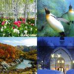 以旭山動物園爲首,7大旭川推薦觀光景點!