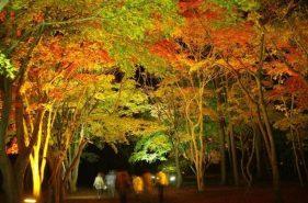 函館市内和郊外的秋天!五大紅葉景點