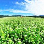 食慾之秋的「新蕎麥」季節到來!北海道蕎麥產地&當地蕎麥麵