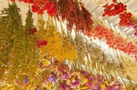 Ekusu Valley Garden |波多野農園的四季繽紛花朵