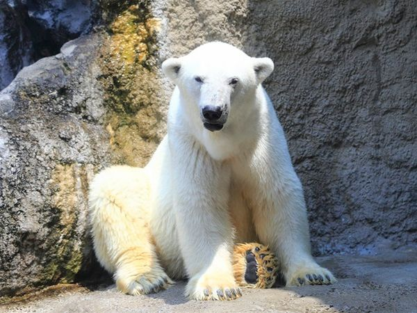旭山動物園しっかり3時間&四季彩の丘・ファーム富田と絶景ひまわり畑!富良野美瑛花めぐり