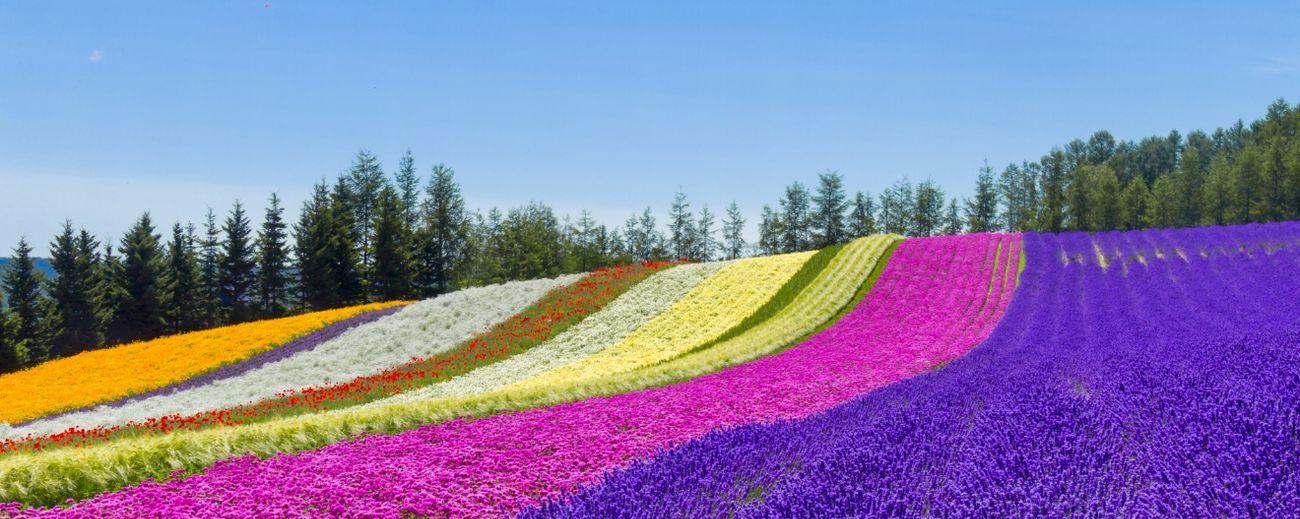 北海道旅行をもっと楽しみたいという方へ