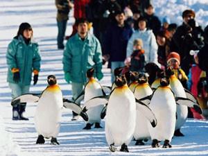 旭山動物園・ペンギンパレード