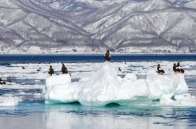 絶対後悔しない!流氷見学ツアーを目的別に上手に選ぶマル得情報!