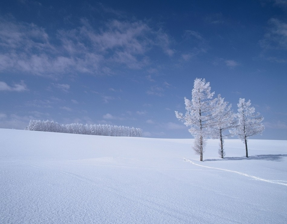純白のマイルドセブンの丘