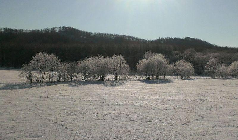 遠景の霧氷