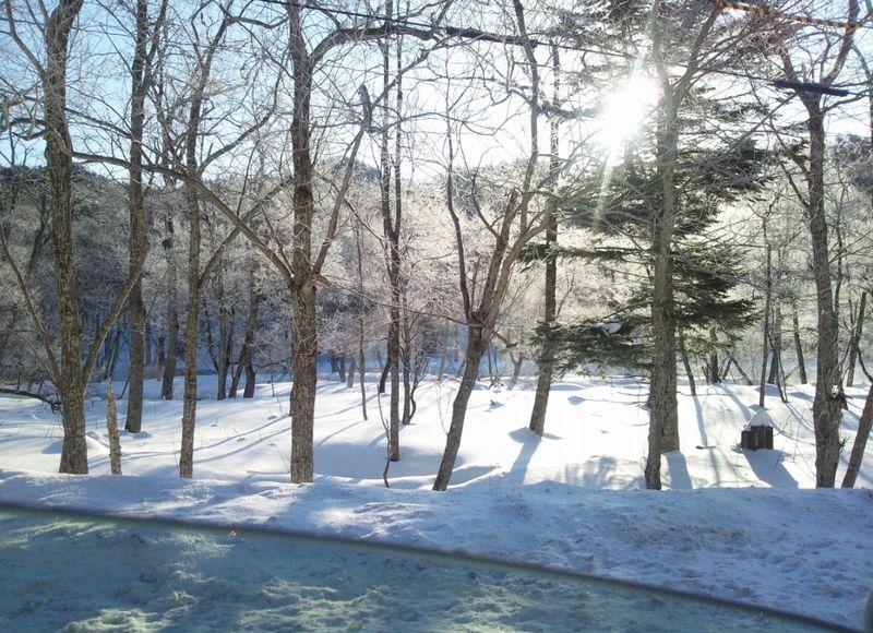 霧氷ロードの風景