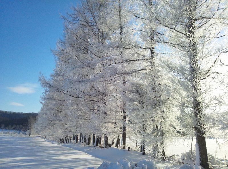 阿寒クリスタルロードの樹氷