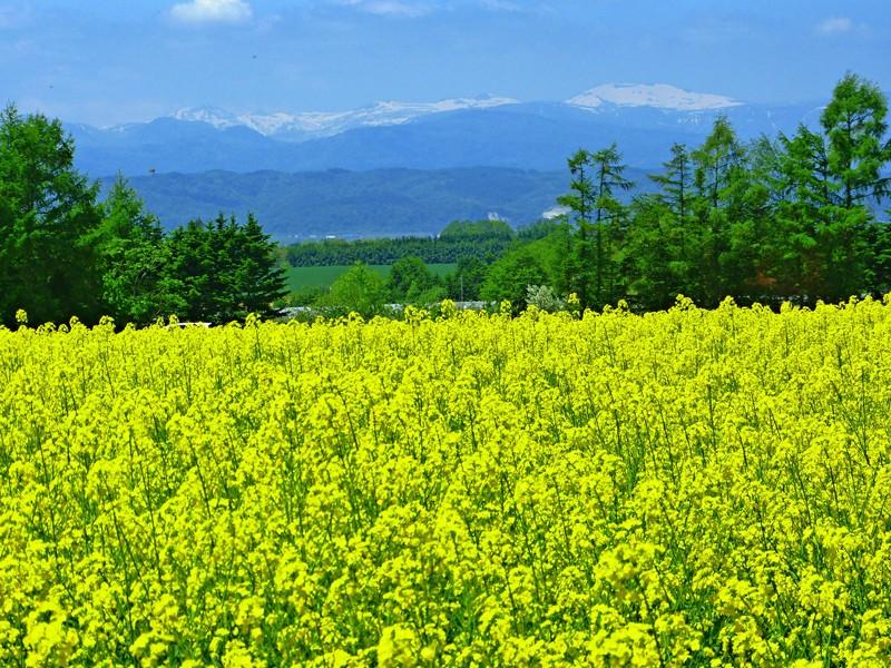 あずましい北海道の風景
