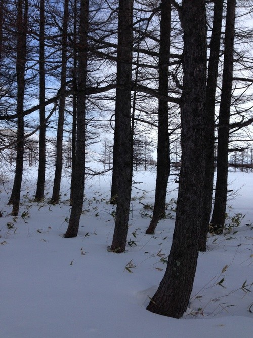 kitanemuro-ranch-way-winter-forest