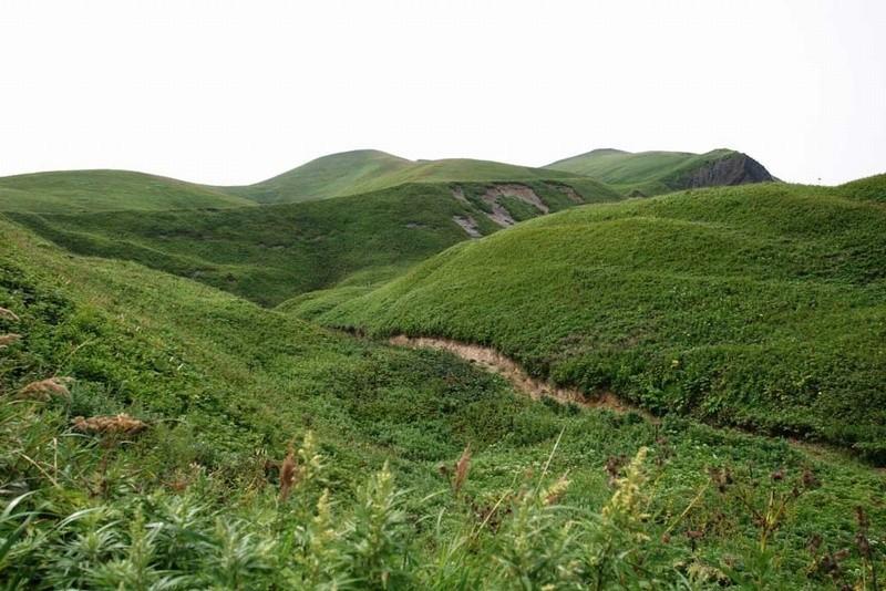 rebun-green-image1