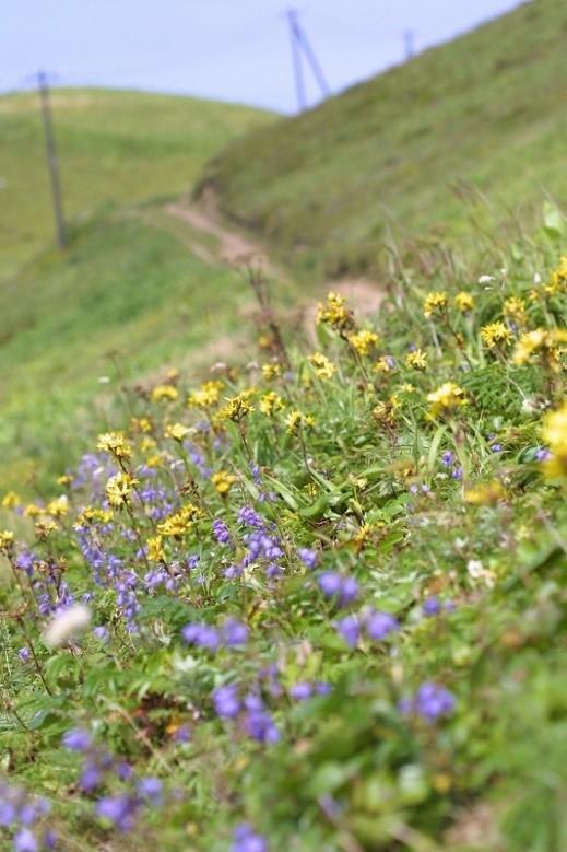 rebun-trail-course