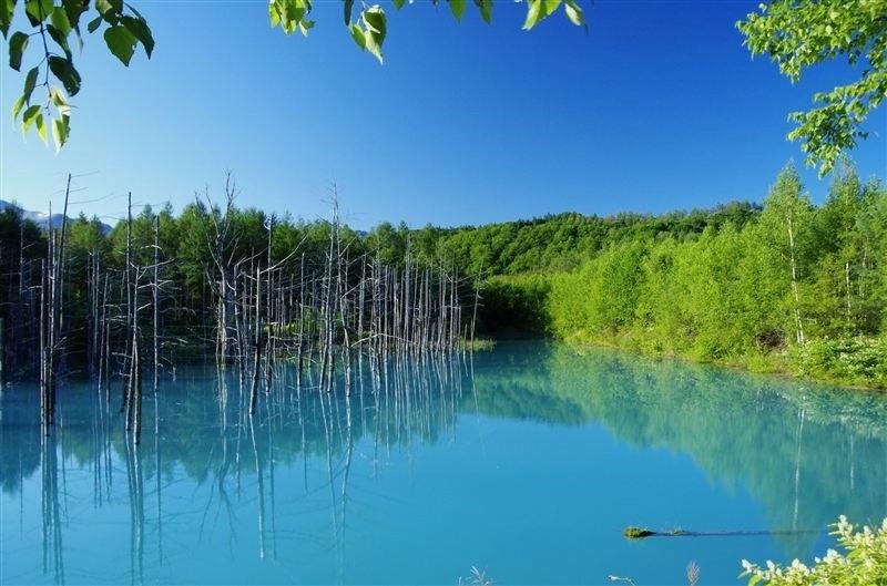 富良野・美瑛の地の良さが出ている観光スポットと時間別 ...