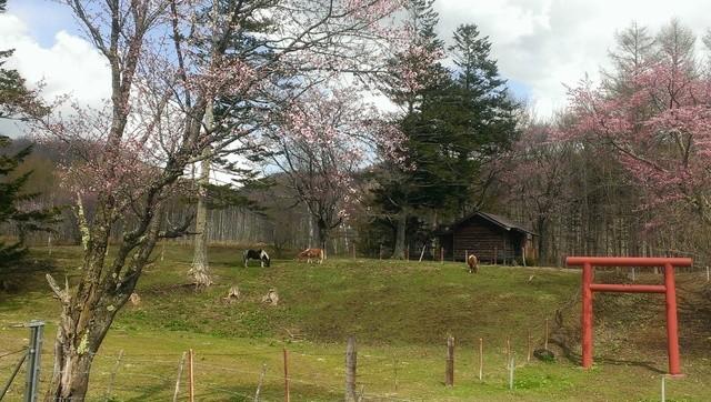 hokkaido-spring-image3