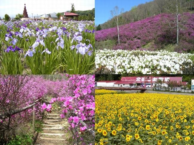 onneyu-flowers
