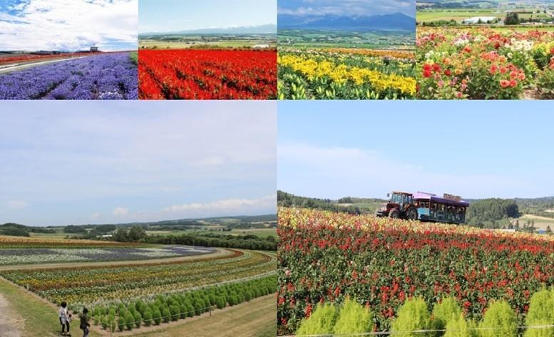 flower-land-kamifurano-image1-min