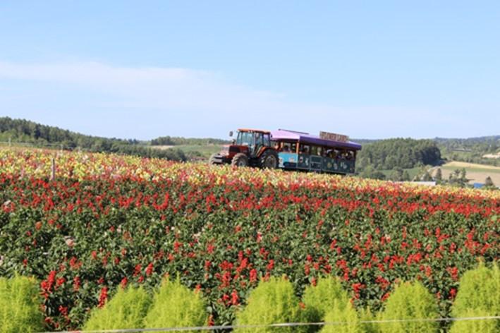 flower-land-kamifurano-image2-min