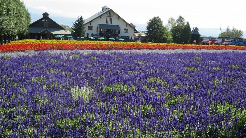 furano-lavender-image02-min