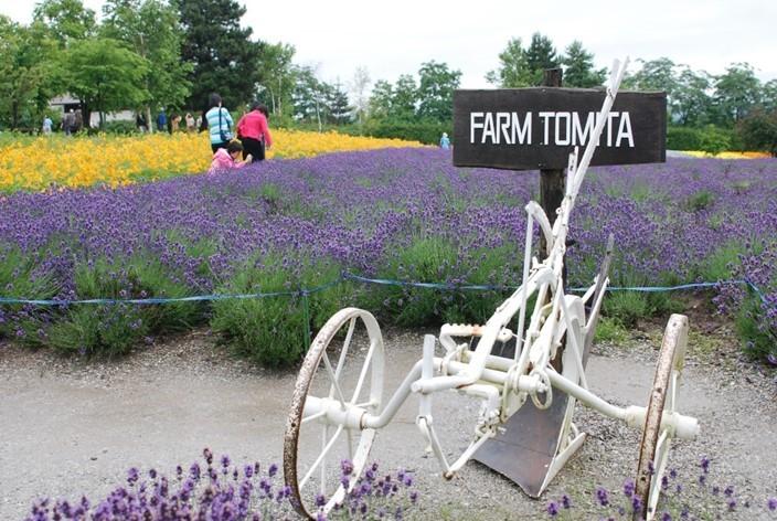 furano-lavender-image03-min