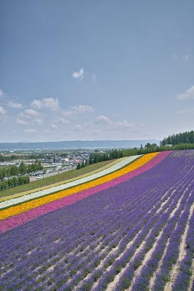 furano-lavender-image04-min