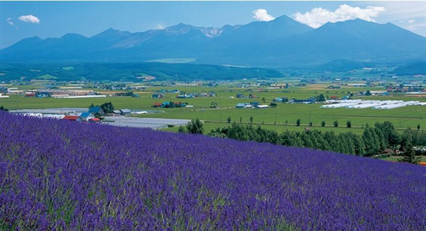 furano-lavender-image05-min