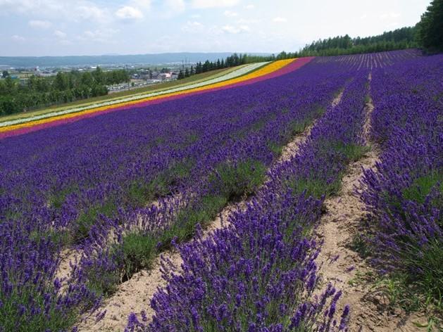 furano-lavender-image08-min