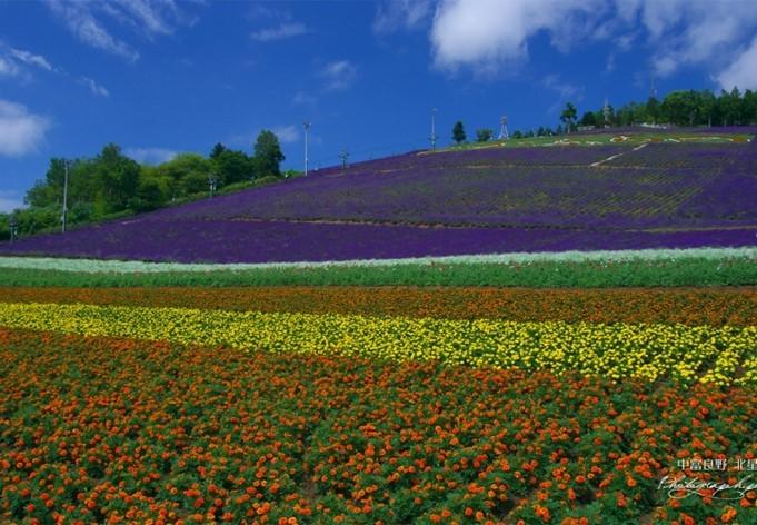 hokuseiyama-lavender-farm-image1