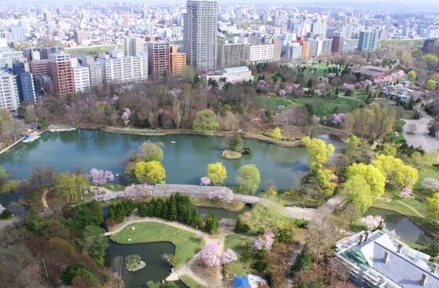 nakajima-park-cherry-from-novotel