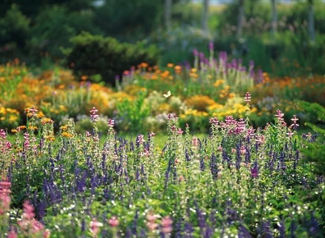 tokachi_garden_photo001
