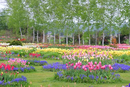 tokachi_garden_photo007
